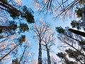 Ekaterinburg - panoramio (19).jpg
