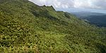 Forested mountainsides in El Yunque.