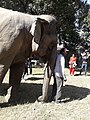 Elephant20171111 122221.jpg