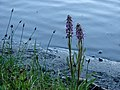 Elephantshead on shore of Frozen Lake out of Sunrise. (4cd22071bc614713a8d5852c05e08fda).JPG