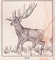 Elk page 944.jpg