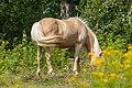 Equus SNY01724 (51317664708).jpg