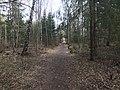 Esso-skogen 3.jpg