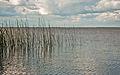 Esteros Del Ibera, Corrientes, Argentina, 2nd. Jan 2011 - Flickr - PhillipC (7).jpg