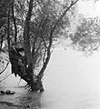 Férfi a fán, 1925, Kopaszi gát. Fortepan 860.jpg