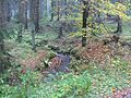 FFH4623-331,Bachtäler im Kaufunger Wald,Sichelnstein,Staufenberg,Landkreis Göttingen.jpg