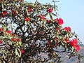 Falam, Myanmar (Burma) - panoramio (39).jpg