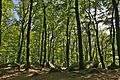 Felsenmeer Wald.jpg