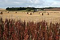 Fields near Auchinhove - geograph.org.uk - 991533.jpg
