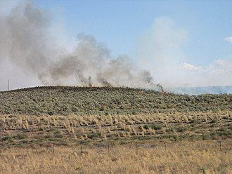Shrub-steppe - Shrubsteppe, one of America's most endangered ecosystems on fire. Artemisia tridentata ssp. wyomingensis is not adapted to fire unlike Ponderosa pine and is in most cases completely destroyed.