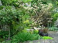 Flickr - brewbooks - Our Garden - May, 2008 (13).jpg