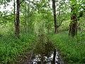 Flooded path in the Teufelsbruch swamp 1.jpg