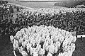 Floriadetentoonstelling in Amsterdam open voor publiek, Bestanddeelnr 925-4979.jpg