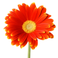 Flower-beach-logo-small.png