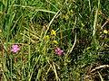 Flowers11Kokosovce8.JPG