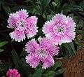 Flowers - Uncategorised Garden plants 225.JPG