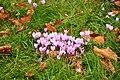 Flowers at Powderham Castle (7626).jpg