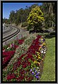 Flowers beside the Toowoomba Range rail tracks-2 (9960334345).jpg