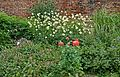 Flowers by the wall, Canal Gardens, Roundhay Park (5828661713).jpg