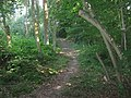 Footpath in Beech Wood - geograph.org.uk - 1437899.jpg