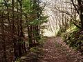 Footpath through Coed y Nant - geograph.org.uk - 319934.jpg