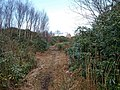 Footpath through the Rhododendrons - geograph.org.uk - 737147.jpg
