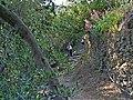 Footpath to Vernazza - panoramio - Frans-Banja Mulder (2).jpg