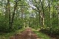 Forêt domaniale de Bois-d'Arcy 48.jpg