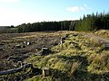 Forest Felling Near Drymen - geograph.org.uk - 152563.jpg
