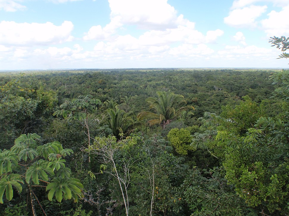Forest canopy in Belize (5344010084)