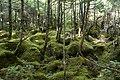 Forest in Yatsugatake 46.jpg