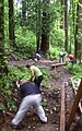 Forest park volunteers building bridge on wildwood trail P2848.jpeg