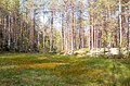 Formation of bogs (oligotrophic) In the climatic zone (taiga, forest-tundra) of the Arkhangelsk region.jpg