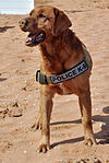 Former Marine military working dog finds new life, love in the Air Force 140210-F-ZF304-095.jpg