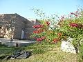 Fortín Olavarría calle Juan Bautista Alberdi al 0 - ceibo (Erythrina crista-galli) 02.JPG