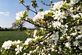 Frühling im Rheintal - panoramio.jpg