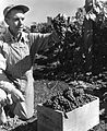 Frank A. Johnson admires a bunch of his well-grown grapes (Concord variety), Salem, Oregon, circa 1935 (6359776181).jpg