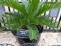Frightful Flora - US Botanic Gardens 06.jpg