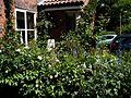 Front garden - Flickr - peganum (21).jpg