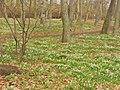 Fruehling im Volkspark Rehberge - Waldweg (Spring in Rehberge Park - Woodland Path) - geo.hlipp.de - 35006.jpg