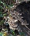 Fungi 2 (4009022609).jpg