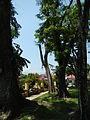 FvfMariaAurora7477 39.JPG