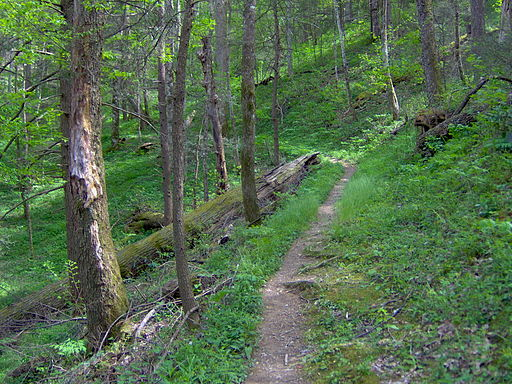 Gabes-mountain-trail-gsmnp1
