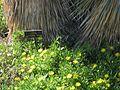 Gardenology-IMG 5123 hunt10mar.jpg