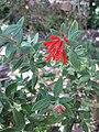 Gardenology.org-IMG 1945 hunt09oct.jpg