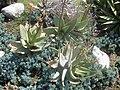 Gardenology.org-IMG 2284 hunt0903.jpg