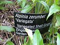 Gardenology.org-IMG 9539 rbgm10dec.jpg