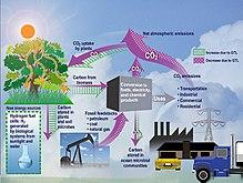 Diagramo montranta la fluon de CO2 en ekosistemo