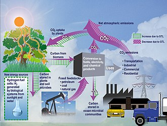 Energetics - Ecological analysis of CO2 in an ecosystem