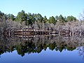 George L Smith GA State Park - panoramio.jpg